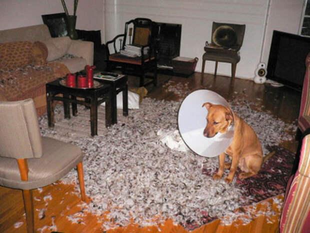 boese Hunde 11