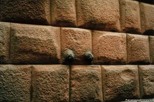 Растение, размягчающее камень