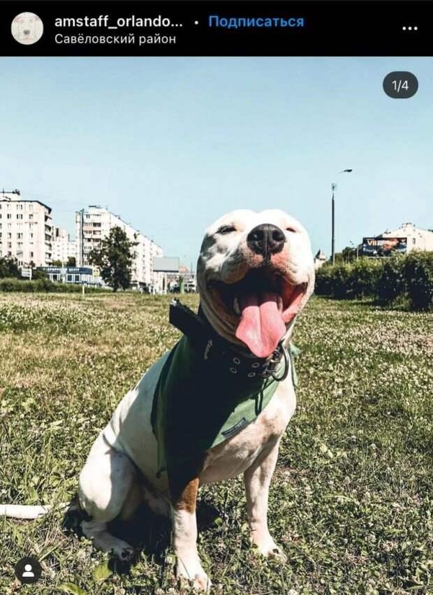 Фото дня: собака спасается от жары в Савеловском