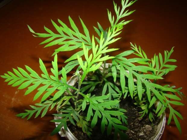 http://house-flora.ru/wp-content/uploads/2012/11/Grevillea.jpg