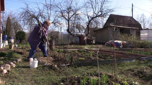 Российским огородникам рассказали правила посева семян