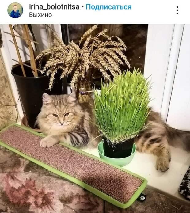 Фото дня: кошачий рай