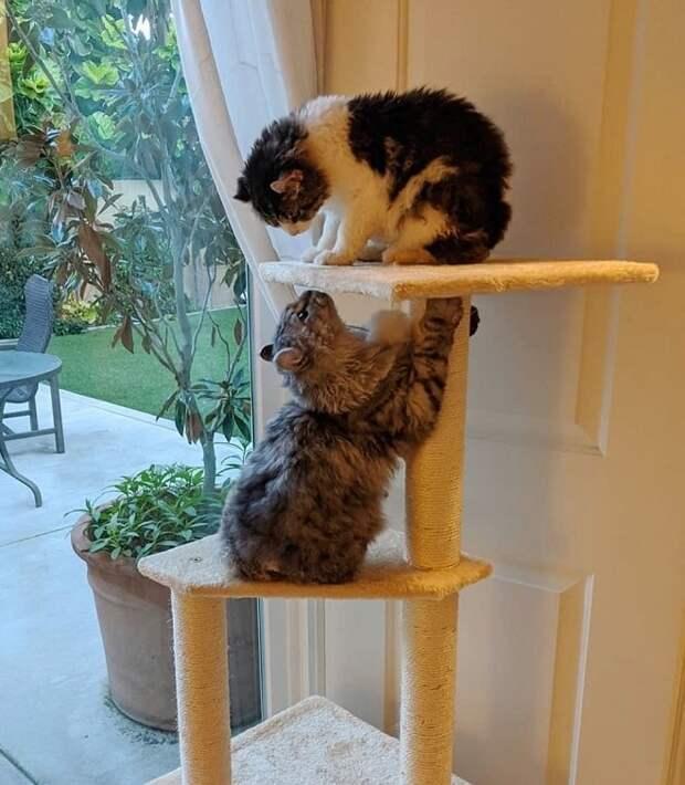 Котики играют