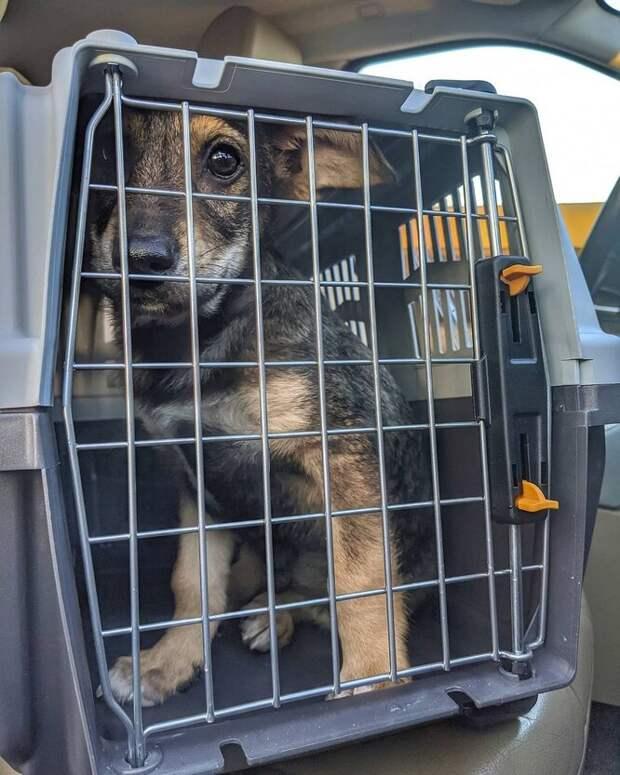 бездомный щенок в клетке
