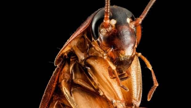 В Китае для уничтожения мусора выращивают армию тараканов