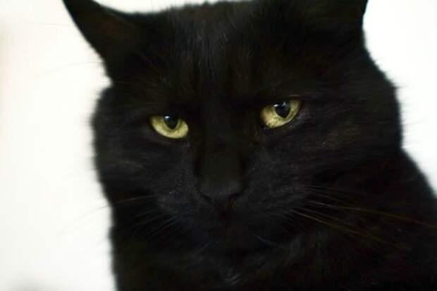 Если чёрный кот дорогу перейдёт...