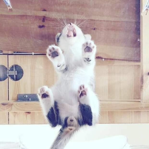 Крысокот котики, коты, милота, мотики, сквозь стекло