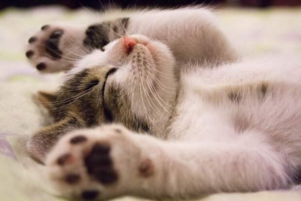 А вы пускаете кота в свою кровать?