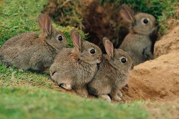 В Башкирии заводчане спасли троих зайчат, упавших в нефть