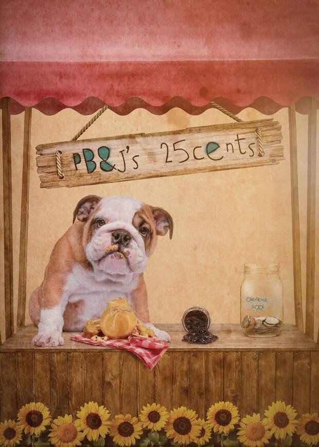 12. Прохожу школу дрессировки... Забавные фото, анималист, домашние животные, очеловечивание, портреты животных, собака, собаки, фото собак
