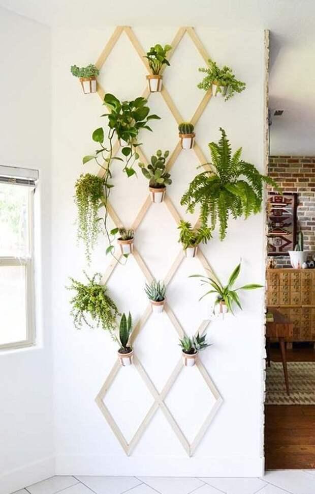 Невероятные идеи для создания мини-сада в домашних условиях