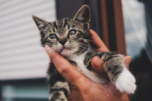 Кот, который молчал всю жизнь, чуть не довёл хозяйку до слёз, когда впервые замурчал у неё на руках