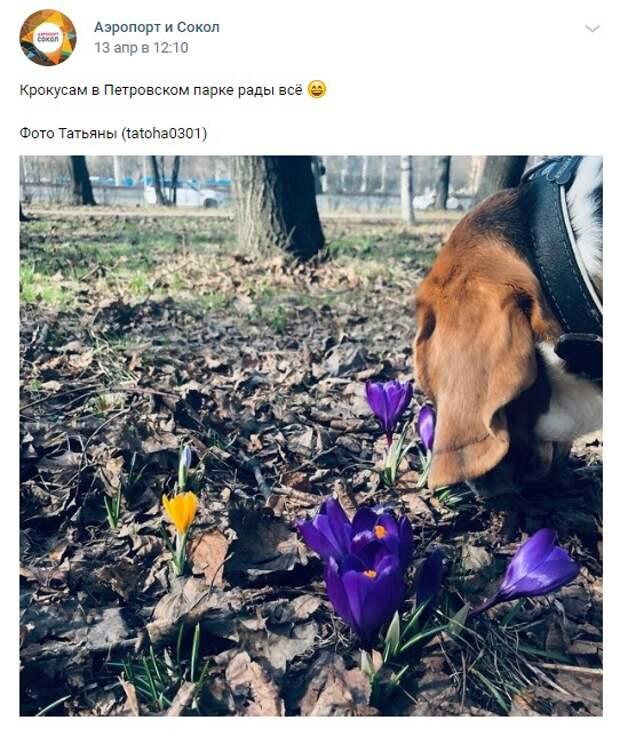 Фото дня: весенние кадры в Петровском парке