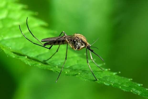 Картинки по запросу mosquito control