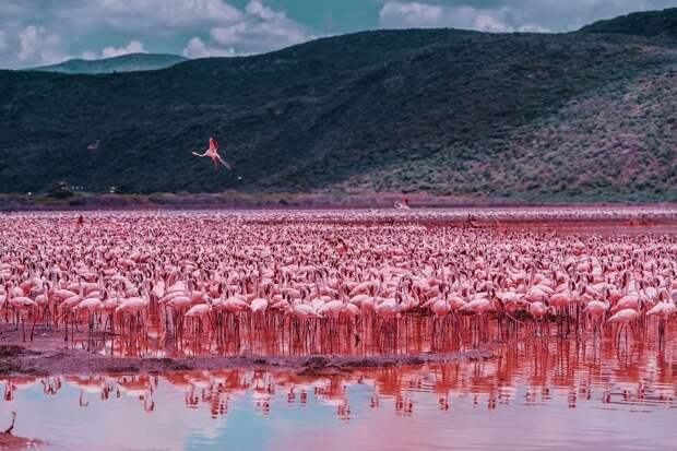 15 ярких фото из Африки, которые поднимут вам настроение