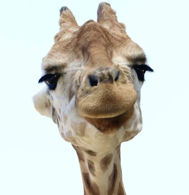 Факты о животных, которые вам забыли рассказать в школе