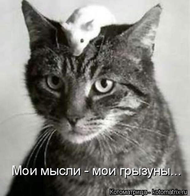 kotomatritsa_t (499x514, 84Kb)