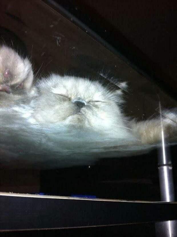 Тающее облако котики, коты, милота, мотики, сквозь стекло