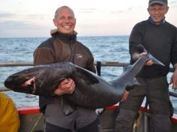 Охотники на акул