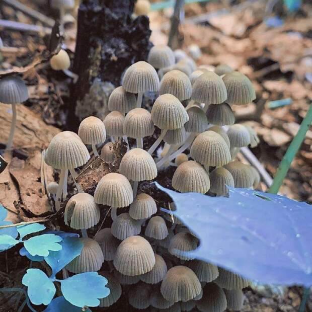 В Серебряном Бору обнаружили мерцающие грибы