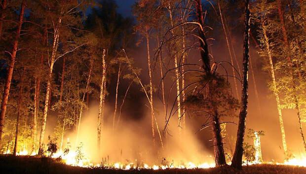 Свыше 300 пожаров произошло в лесах Подмосковья за год