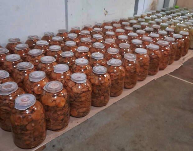 Партия грибов готовится к хранению
