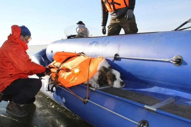 Невероятное спасение вмёрзшей в лед собаки!