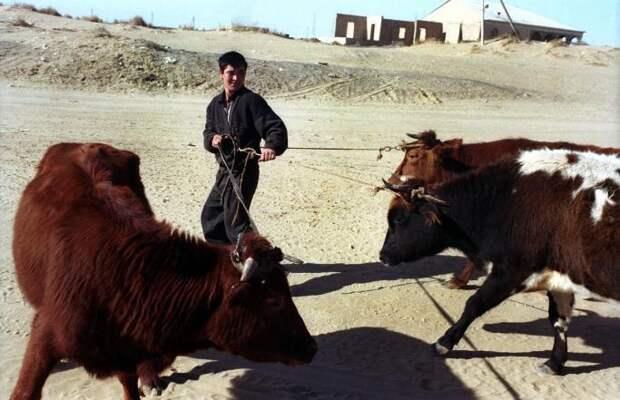 Повседневная жизнь в Балканском велаяте, где добывается 95,9 % туркменской нефти, конец 1990х.