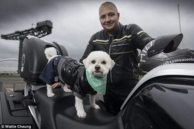 Хозяин Милли, шотландец Пол Кроссен, отправил фотографии любимицы на конкурс домашних животных, которые любят ездить на мотоциклах. животные, забавно, истории, мотоциклист, мотоциклы, питомцы, собака, собаки