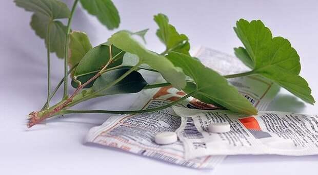 Проверенное средство, которое поможет реанимировать даже безнадежные комнатные растения