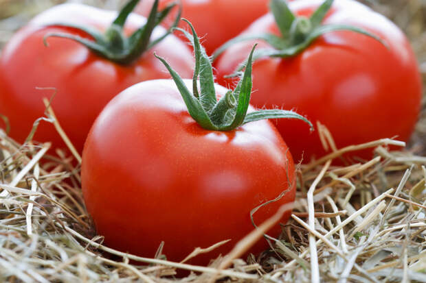 Картинки по запросу Как сохранить помидоры дольше?