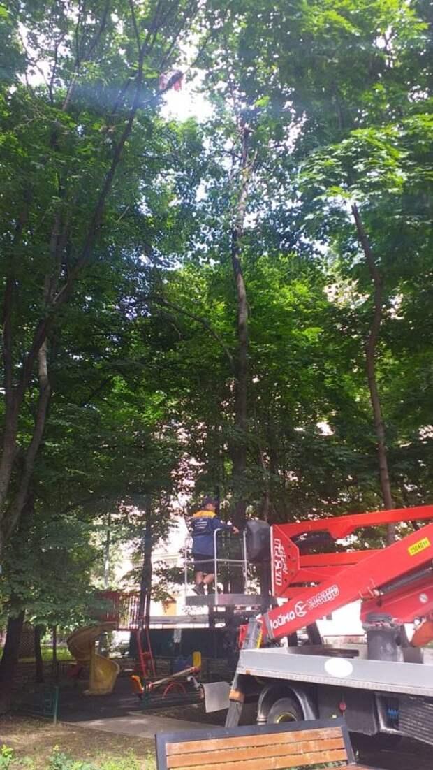 Строительный мусор повис на деревьях по улице Куусинена