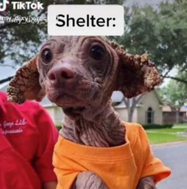 Студентка приютила несчастного худенького щенка и не пожалела