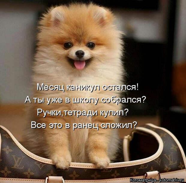 kotomatritsa_W (700x692, 302Kb)
