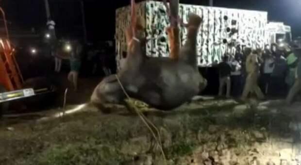 Спасение слона, упавшего в колодец