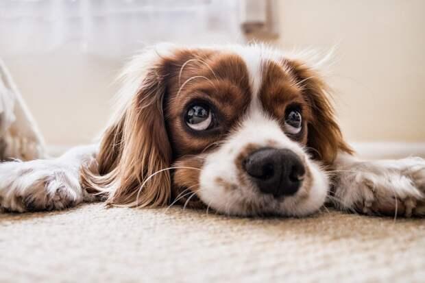 Кинолог рассказал о самых распространённых страхах собак