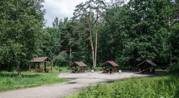 Алешкин лес. Фото: ГПБУ «Мосприрода»