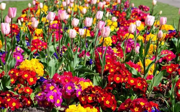 Весенние цветы в моём саду