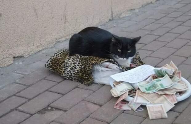 Это он не для себя собирал, а для других кошек...