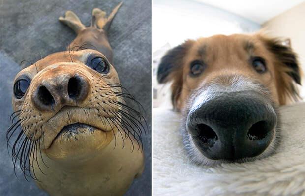 20.  животные, собака, сходство, тюлень