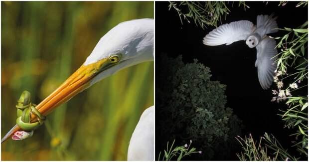 35 удачных и захватывающих фотографий птиц. Очаровательные создания