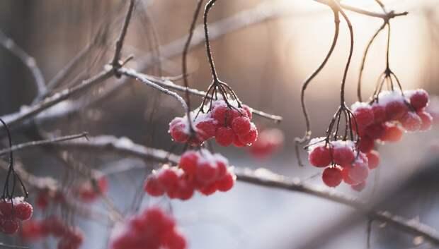 Небольшой снег и 0 градусов ожидается в Подольске в первый день февраля