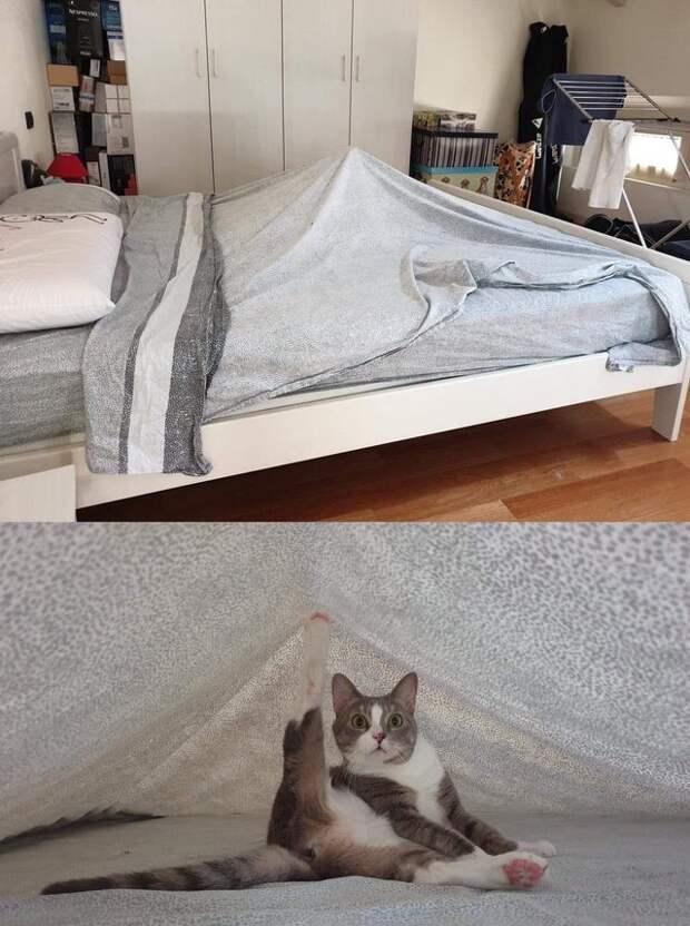 16 снимков дружбы людей и котов, которая проходит по правилам тех, у кого лапки