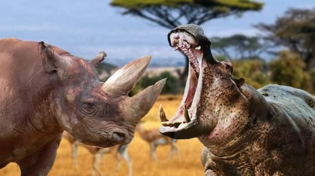 Бегемот в деле: бронированный зверь против льва и носорога