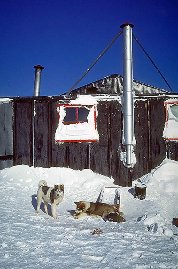 Ездовые собаки в Антарктиде, 1970-е.
