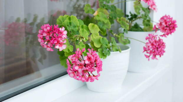 Порадуют зимой: 5 комнатных растений, цветущих круглый год