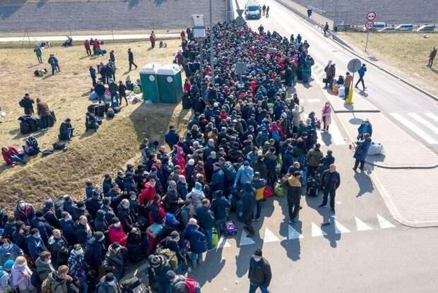 Толпу заробитчан, пытающихся прорваться из Польши на Украину, сравнили с «ядовитой коброй»