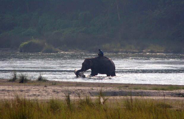 Знакомьтесь, слон