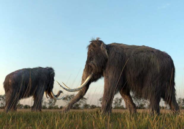 Американцы решили заселить тундру мамонтами
