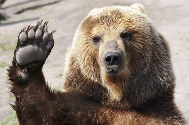 Запад разбудил русского медведя: Россия выбирает символ силы